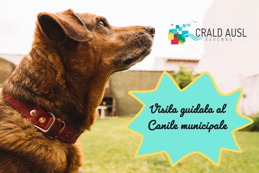 canile-municipale-crald